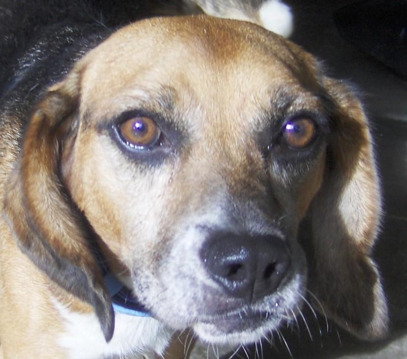 Dog Adoption Gta