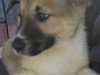 puppymale2