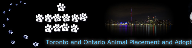 4 legged love adoption and rescue for toronto, ontario