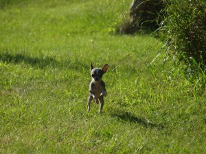 This is just one of the cutest series of running shots - too cute