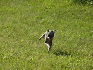 Wow, look at him run!