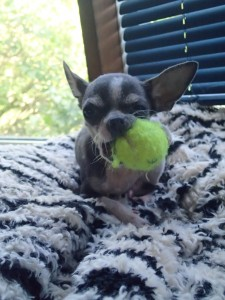 He loves his tiny tennis balls