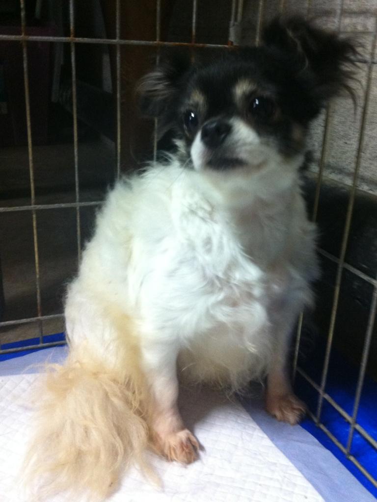 Adopting A Dog In Ontario Rescue
